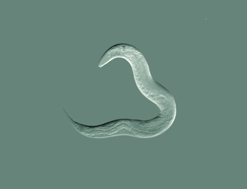 2nd Meeting of the Italian C. elegans Research Community (CANCELLED TILL FURTHER NOTICE)